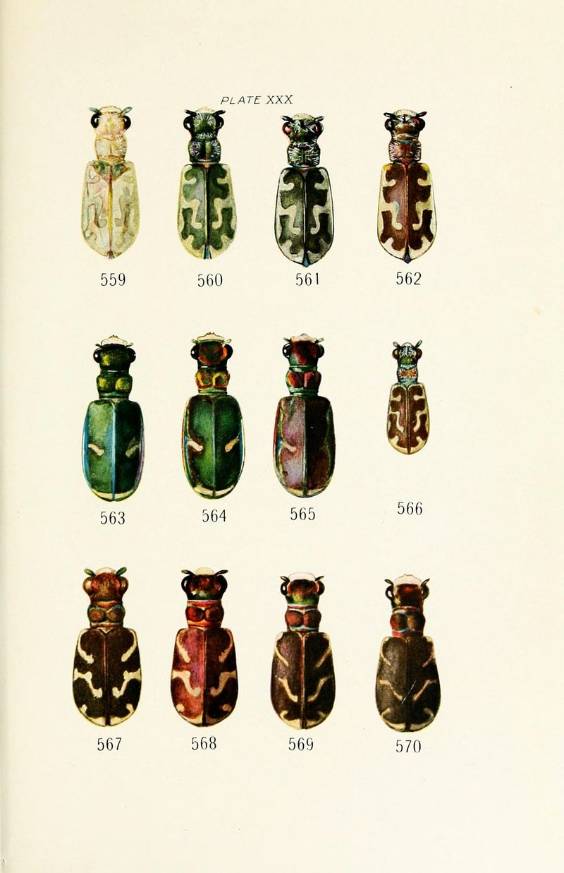 Animal-Insect-Beetle-Educational-plate-2